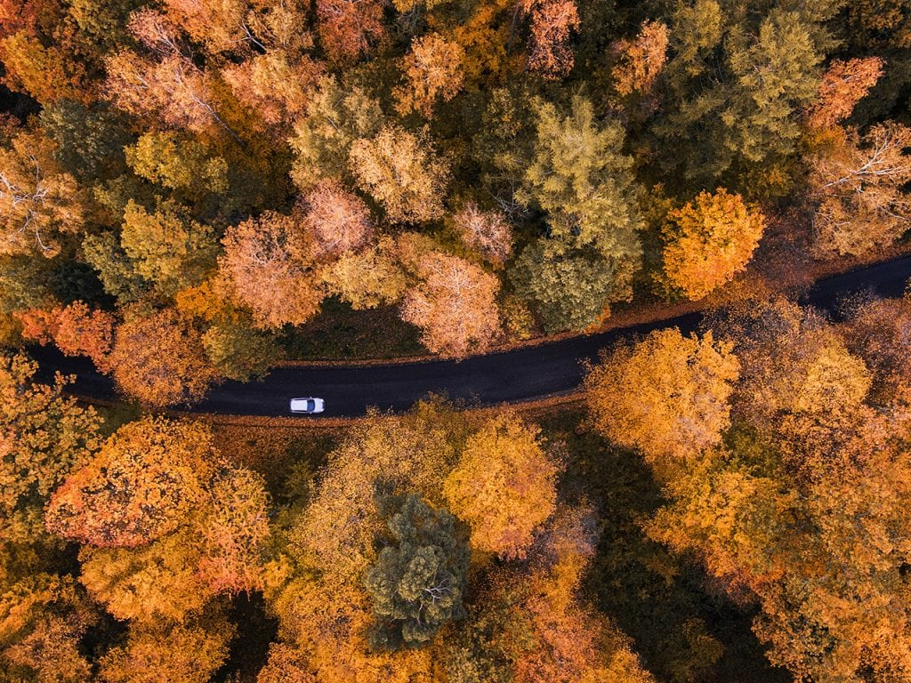 A car driving on a road in the forest